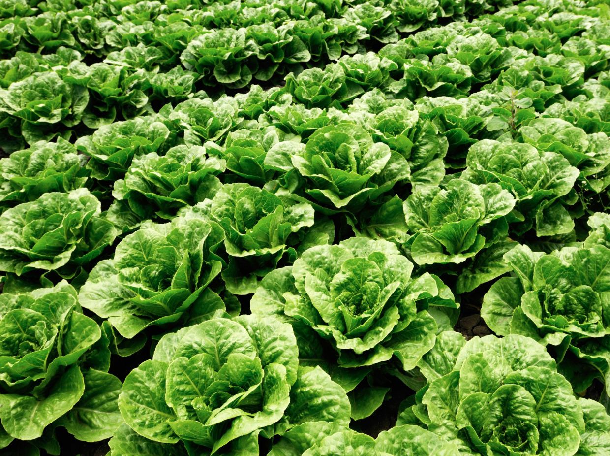 Who knew lettuce could be so beautiful?