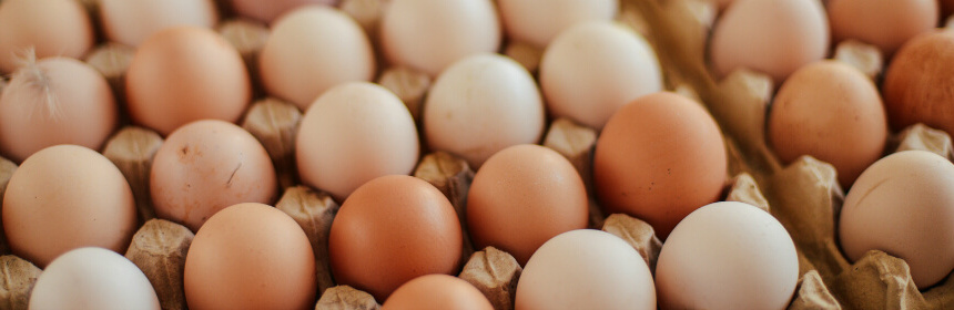 how-are-hatching-eggs-packed.jpg
