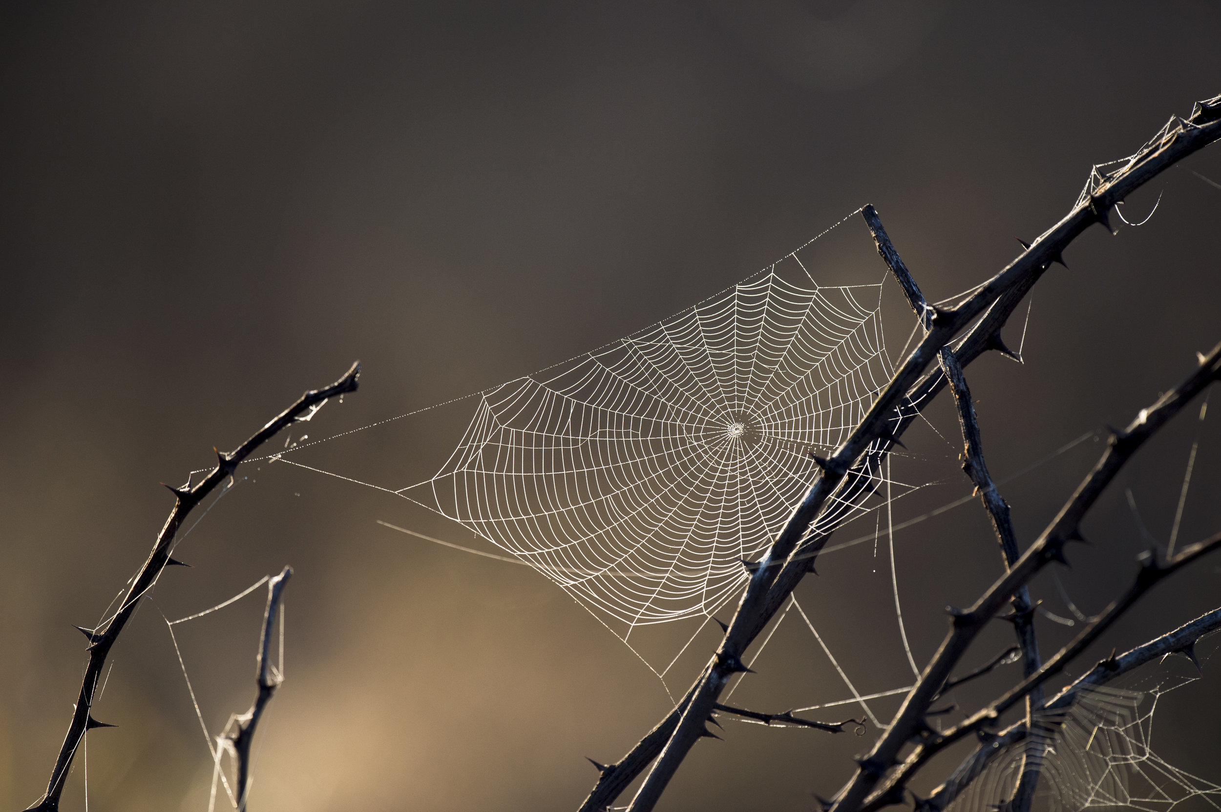 This is not a photo from my house, but this is almost precisely like one of the webs in our tree looks like. It makes me feel ready for Halloween!