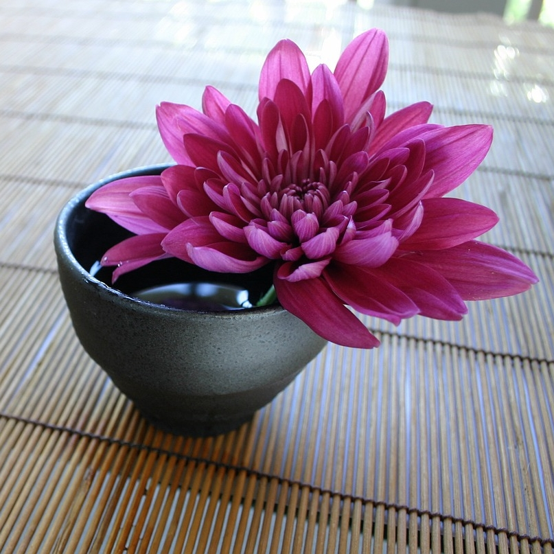 chrysanthemum-757439_1280.jpg