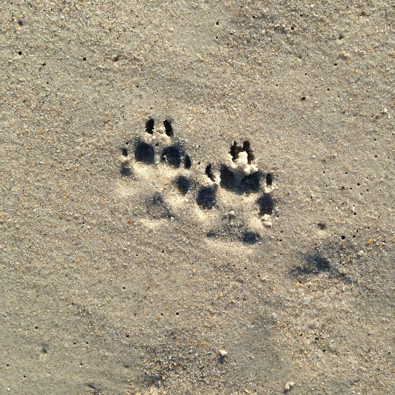 footprints1.jpg