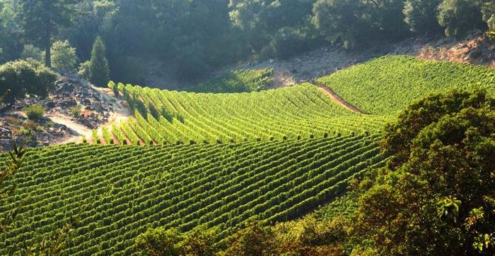 vineyard-03.jpg