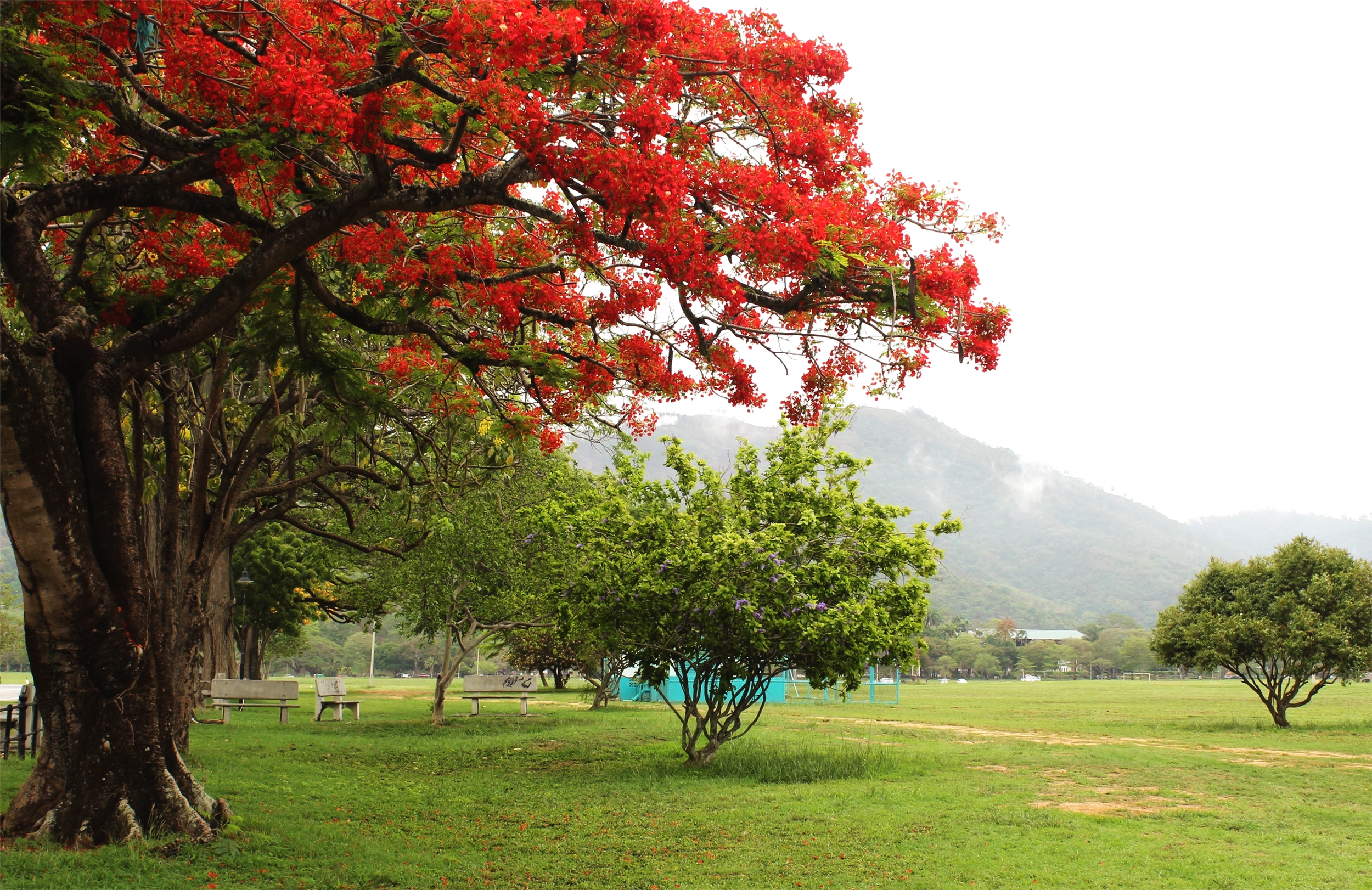 NISHLA-Design_Poui-Trees-Trinidad_IMG_1293.jpg