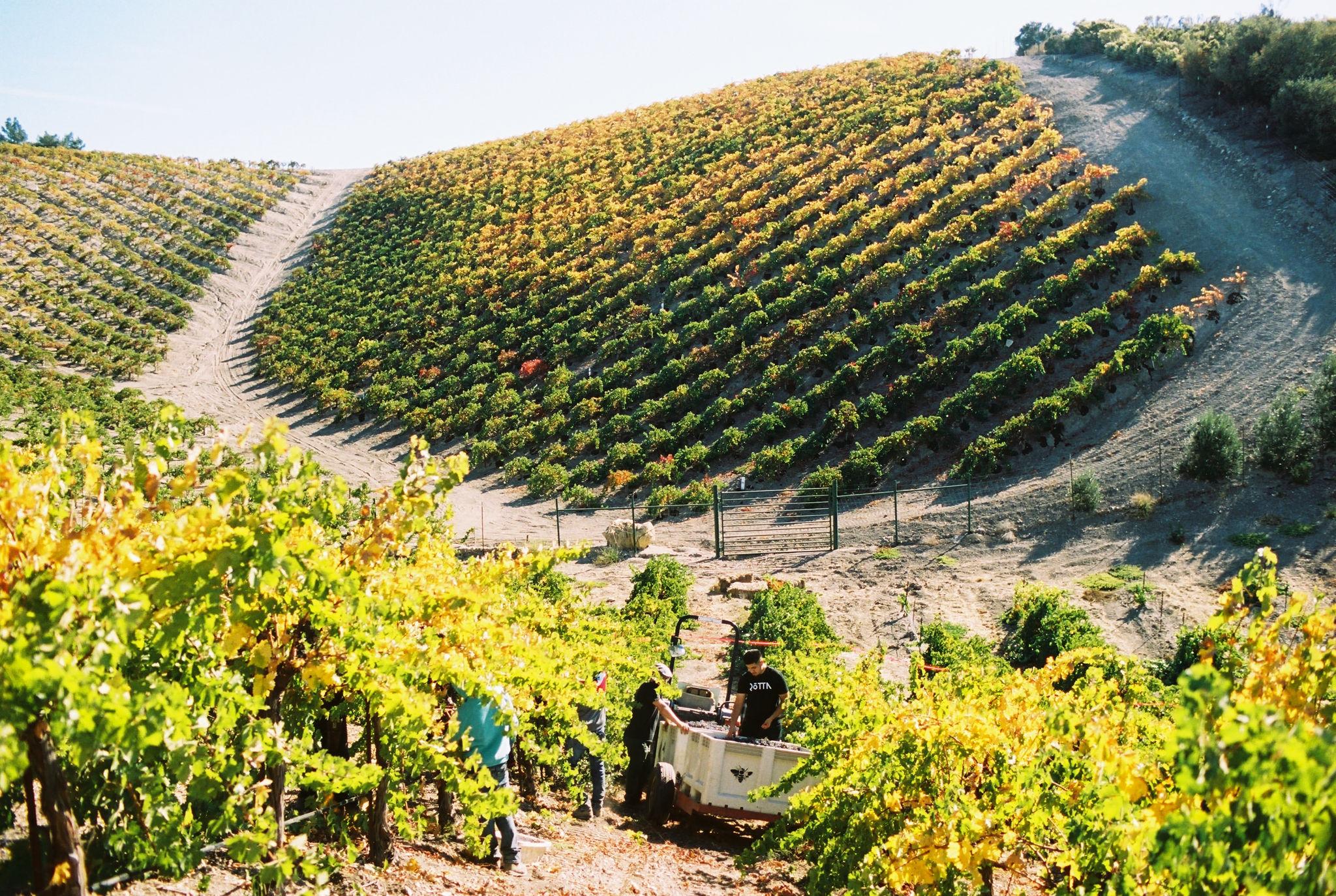 acacia_productions-halter_ranch-harvest-FILM-0081.jpg
