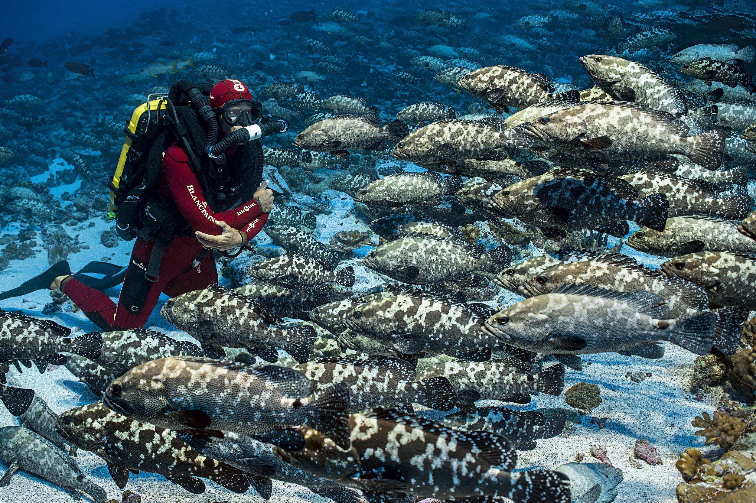 Bon-plan-exposition-700-requins-dans-la-nuit-elisa-les-bons-tuyaux-credit-photo-Laurent-Ballesta-5.jpg
