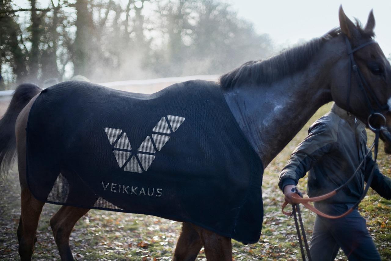 Veikkaus_horse.jpeg