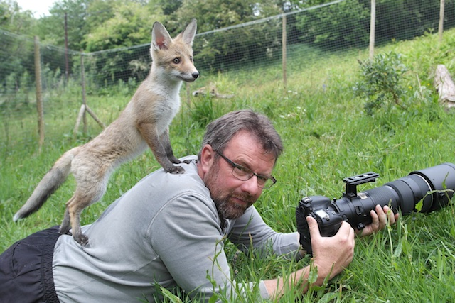 96616495_Richard Bowler with Hetty the fox cub on his back. Captive bred and hand reared.jpg