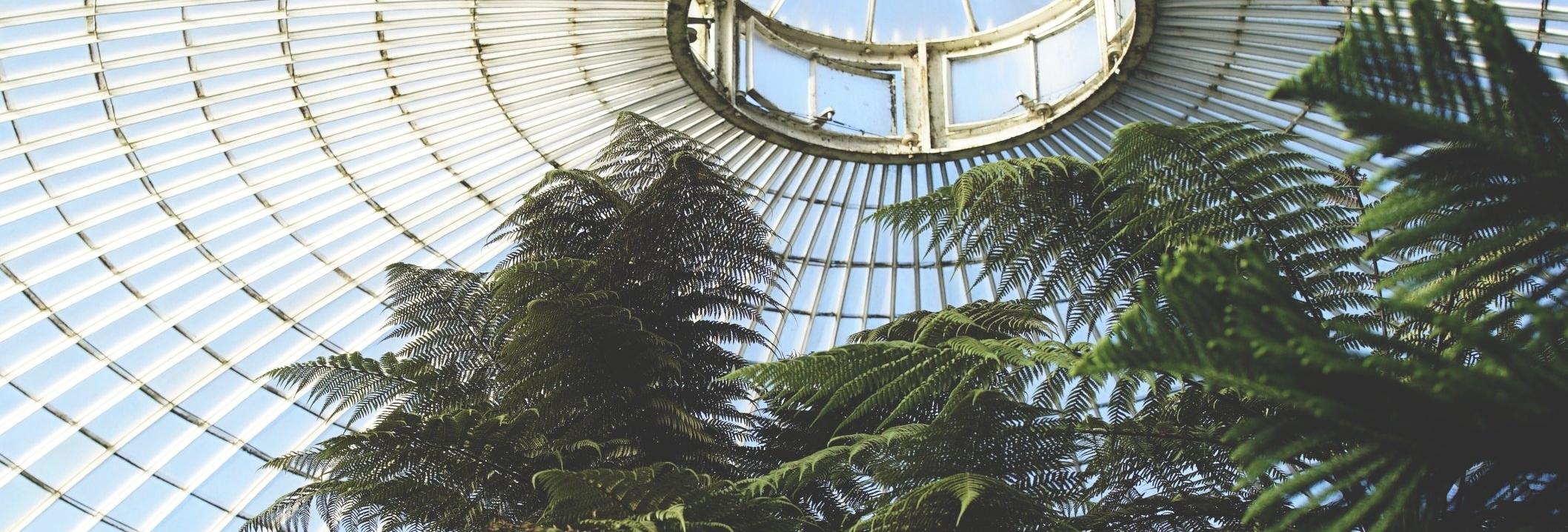 Glasgow Botanics - Magazine Photography