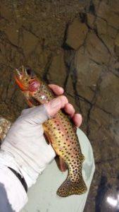 Roaring-Creek-300x169.jpg