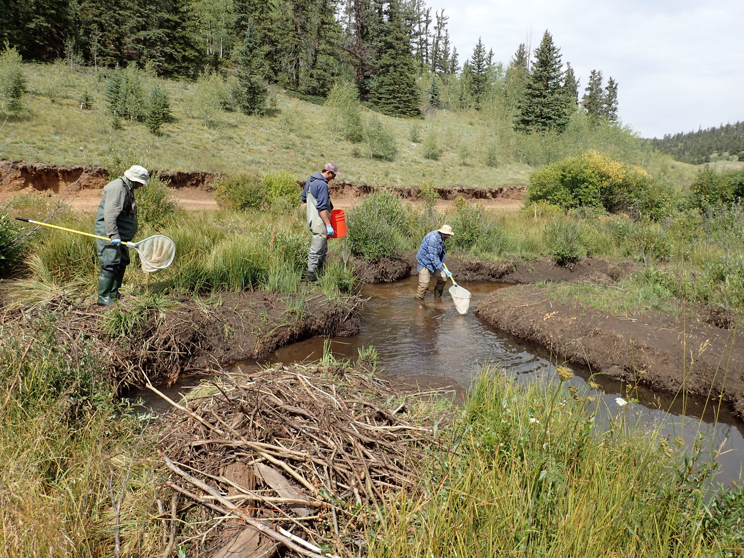 Rock Creek Carcass Removal J Rasmussen.JPG