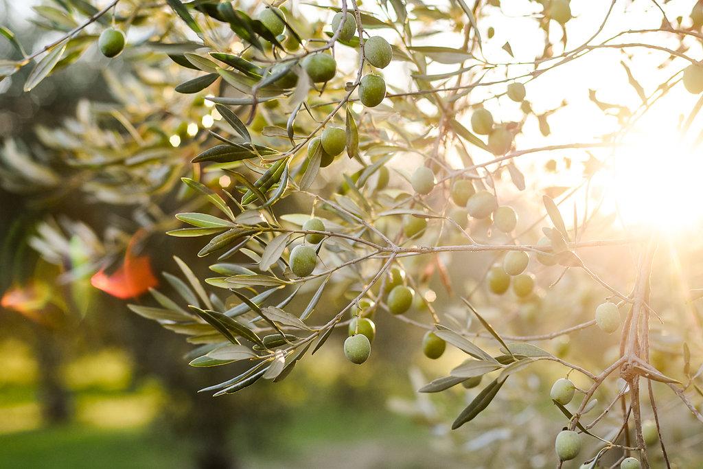 harvest_wr(82of102).jpg