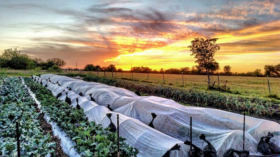 Emadi Acres Farm: Sunset in Fall