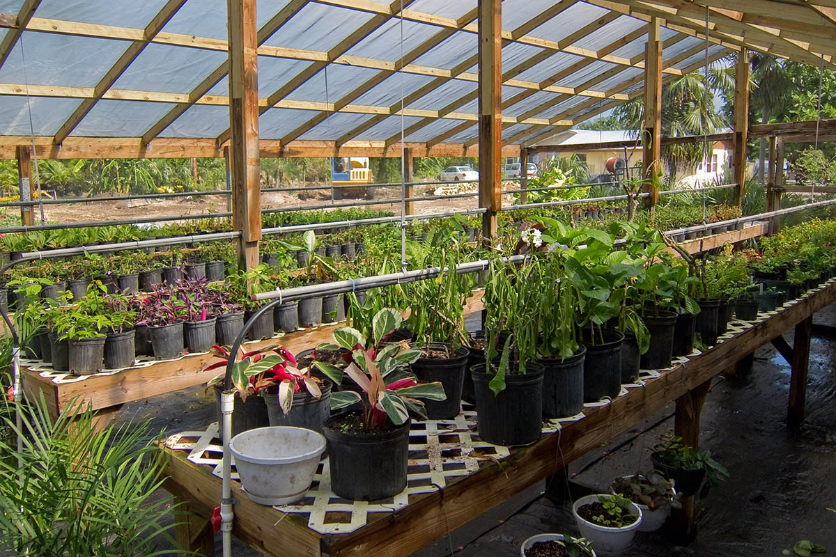 Plant Nursery - Locally grown and proud of it!