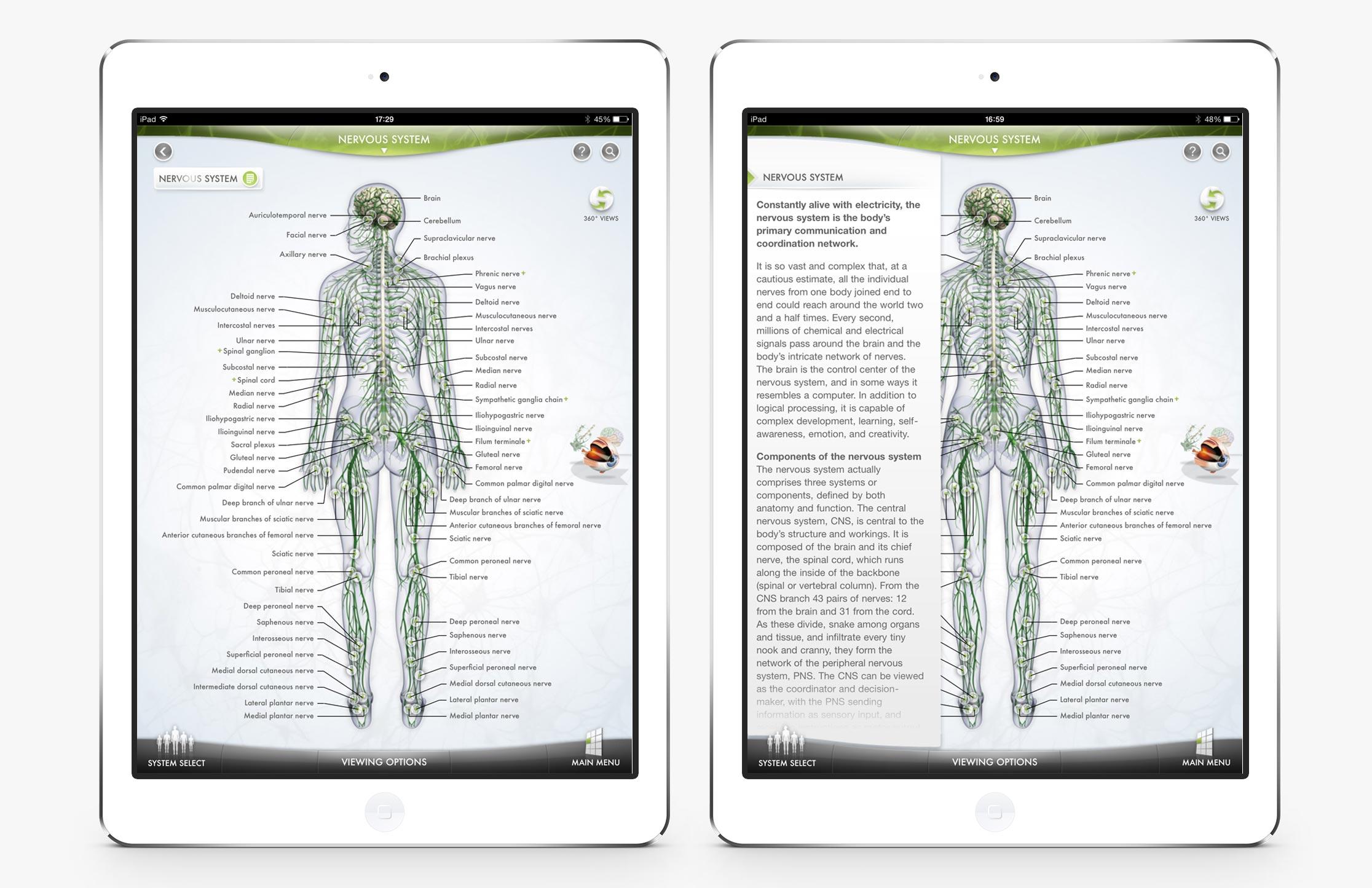 The-Human-Body-2.jpg