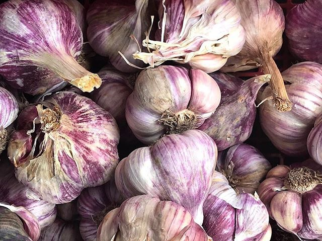 Raise your hand if you are a forever fan... 🙋!  Garlic has been loved and praised since ancient times, used in cuisines around the world and even as bug repellent or to fight the plague! Whether or not that proved to be efficient, we definitely have some amazing facts📋about garlic today that has continued its popularity in home-cooking and remedies.  Here are a handful of its medicinal properties and benefits:  💜 Raw crushed, chopped or chewed garlic has a sulfur-containing anti-bacterial and anti-fungal compound known as, Allicin, which contains anti-oxidant properties👊 💜 due to its active compounds, it has been shown to reduce blood pressure in those with high blood pressure 💜 it has long been known and used to boost immune function. In multiple studies, garlic was shown to shorten the average length of🤒cold and flu symptoms 💜 its anti-oxidant properties have been shown to reduce oxidative stress which may reduce risks link to🧠brain diseases like Alzheimer's and dementia 💜 Garlic contains a little bit of everything- Vitamins B1, B6, C, calcium, copper, potassium, selenium, manganese, iron, and fiber💯  What is your favorite way to use garlic as a star in your dishes, as the flavor enhancer, or key to a certain home-remedy?  I find it fascinating to learn the different tricks each family and culture has up their sleeve with this long-loved gift from nature. Let's exchange recipes and remedies below...✍👇👇👇✍