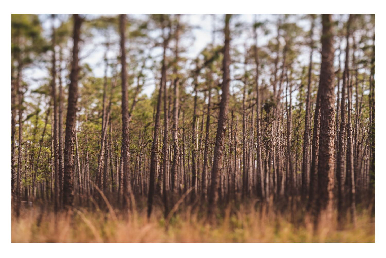 i saw the beautiful trees 1.jpg