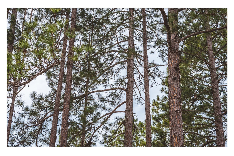 i saw the beautiful trees 2.jpg