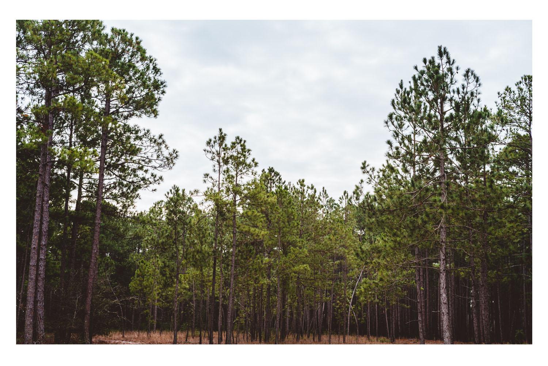 i saw the beautiful trees 3.jpg