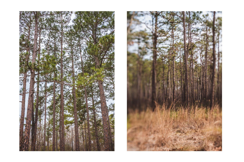i saw the beautiful trees 5.jpg