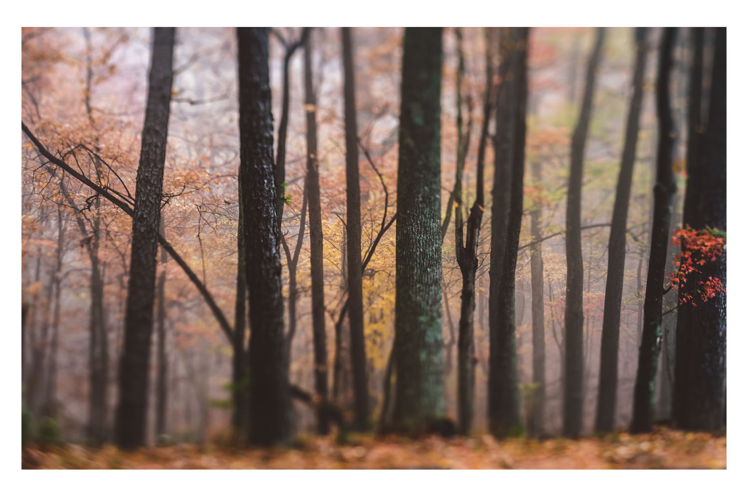 the trees in the fog 4.jpg