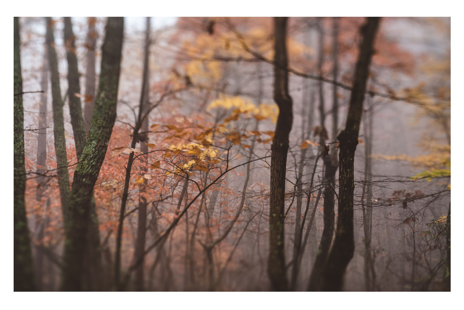 the trees in the fog 8.jpg