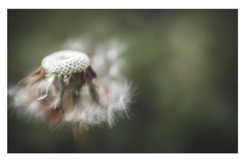 wind dancer.jpg