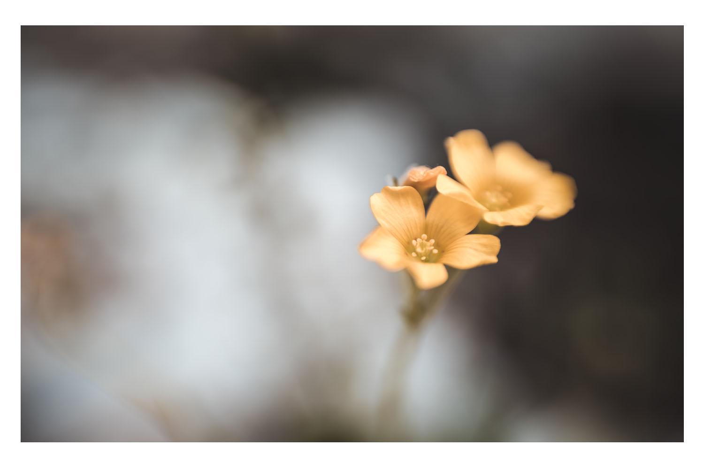 little blooms of sunshine.jpg