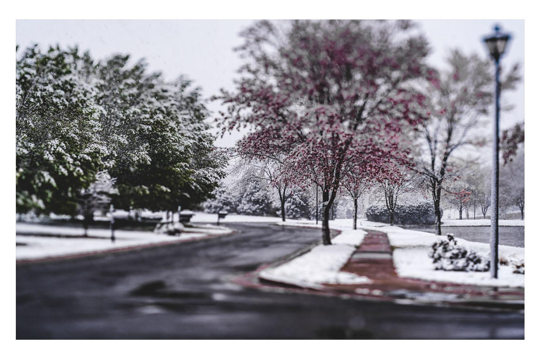 winter in the carolinas 2.jpg