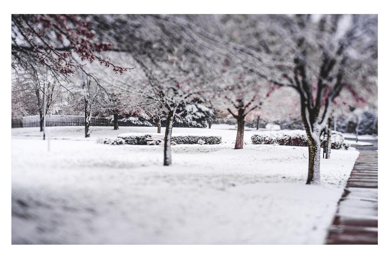 winter in the carolinas 3.jpg