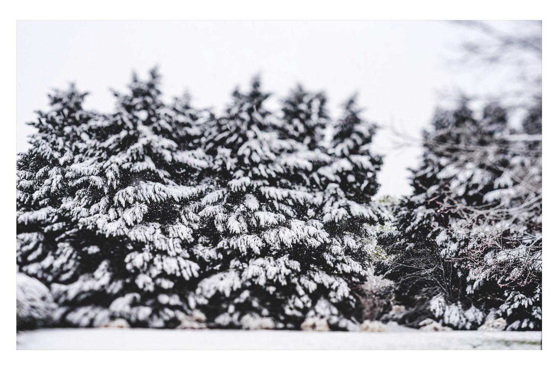 winter in the carolinas 6.jpg