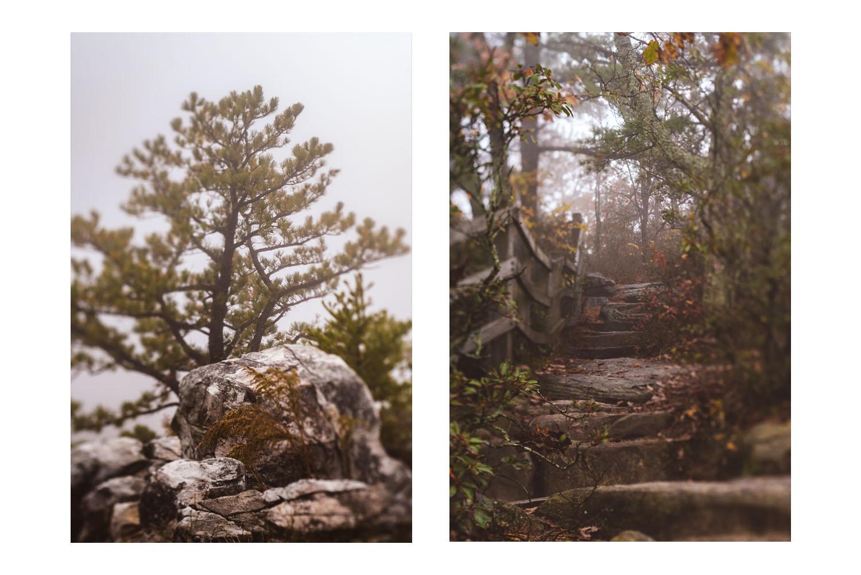into the fog 3.jpg