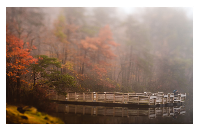 into the fog 4.jpg
