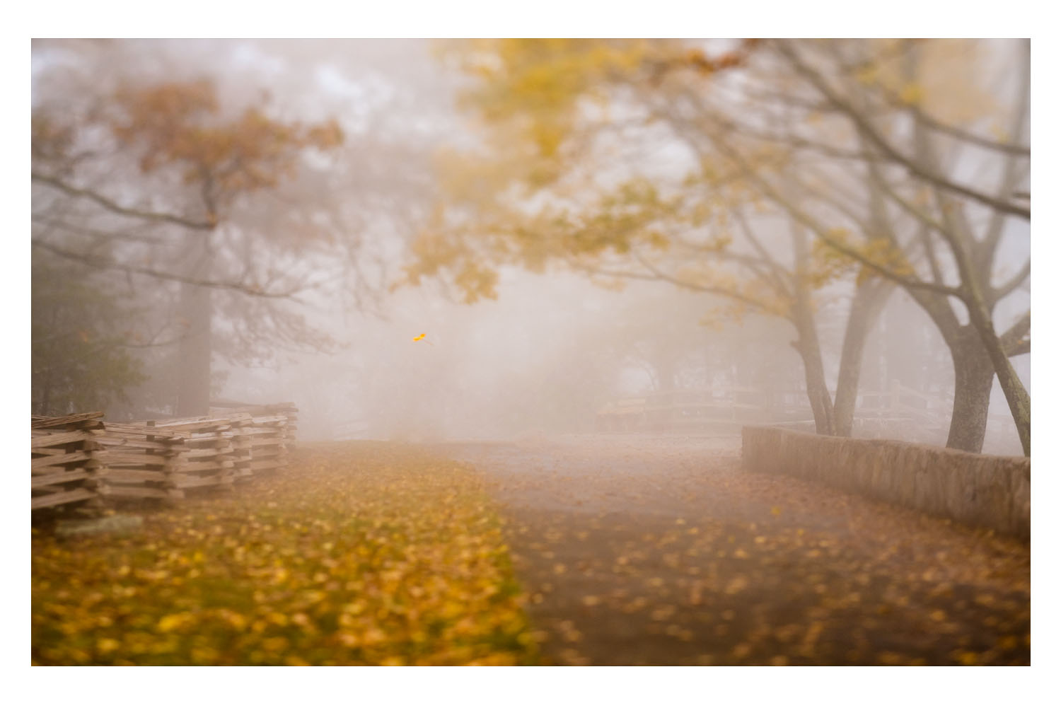 into the fog 5.jpg