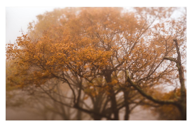 into the fog 7.jpg