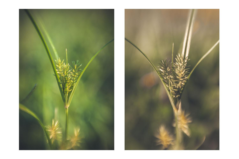 natures little world 2.jpg