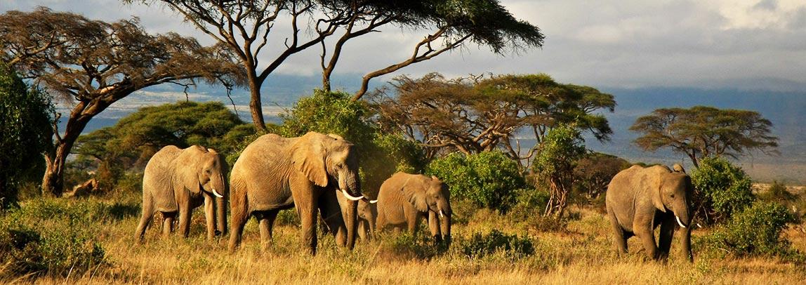 safari-and-game-reserves_1.jpg