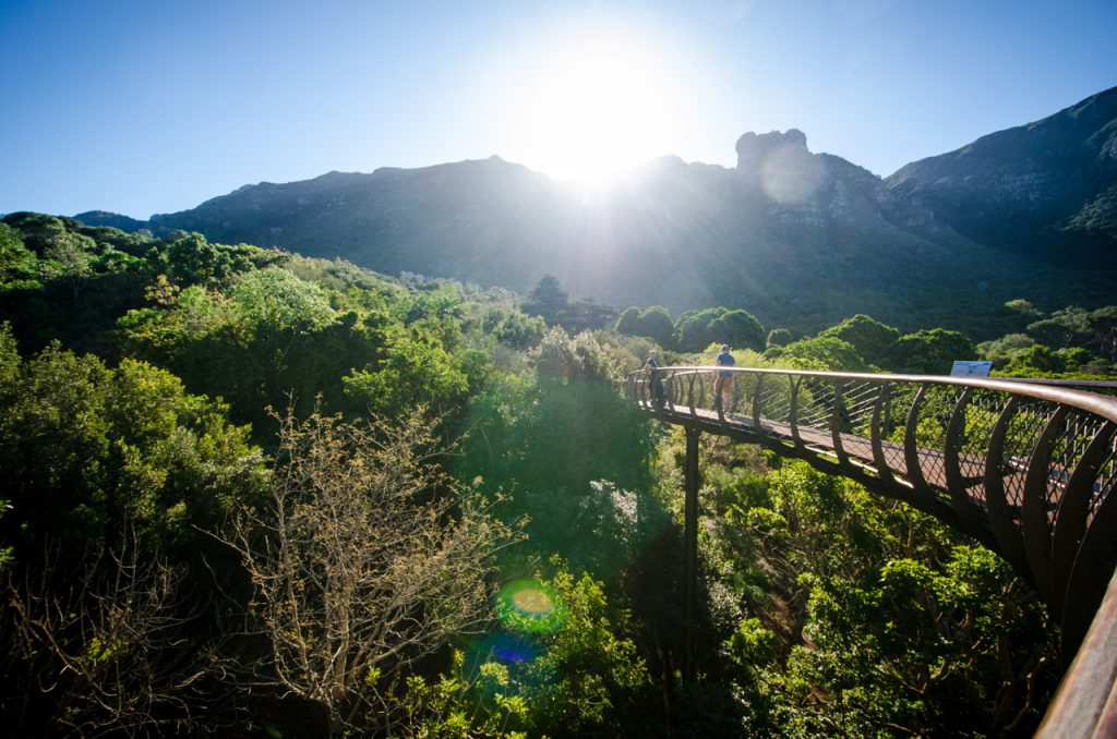 CTT_Kirstenbosch-Boomslang_cLisa-Burnell-11-e1486371768970.jpg