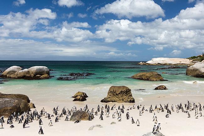boulders-beach-cape-town.jpg