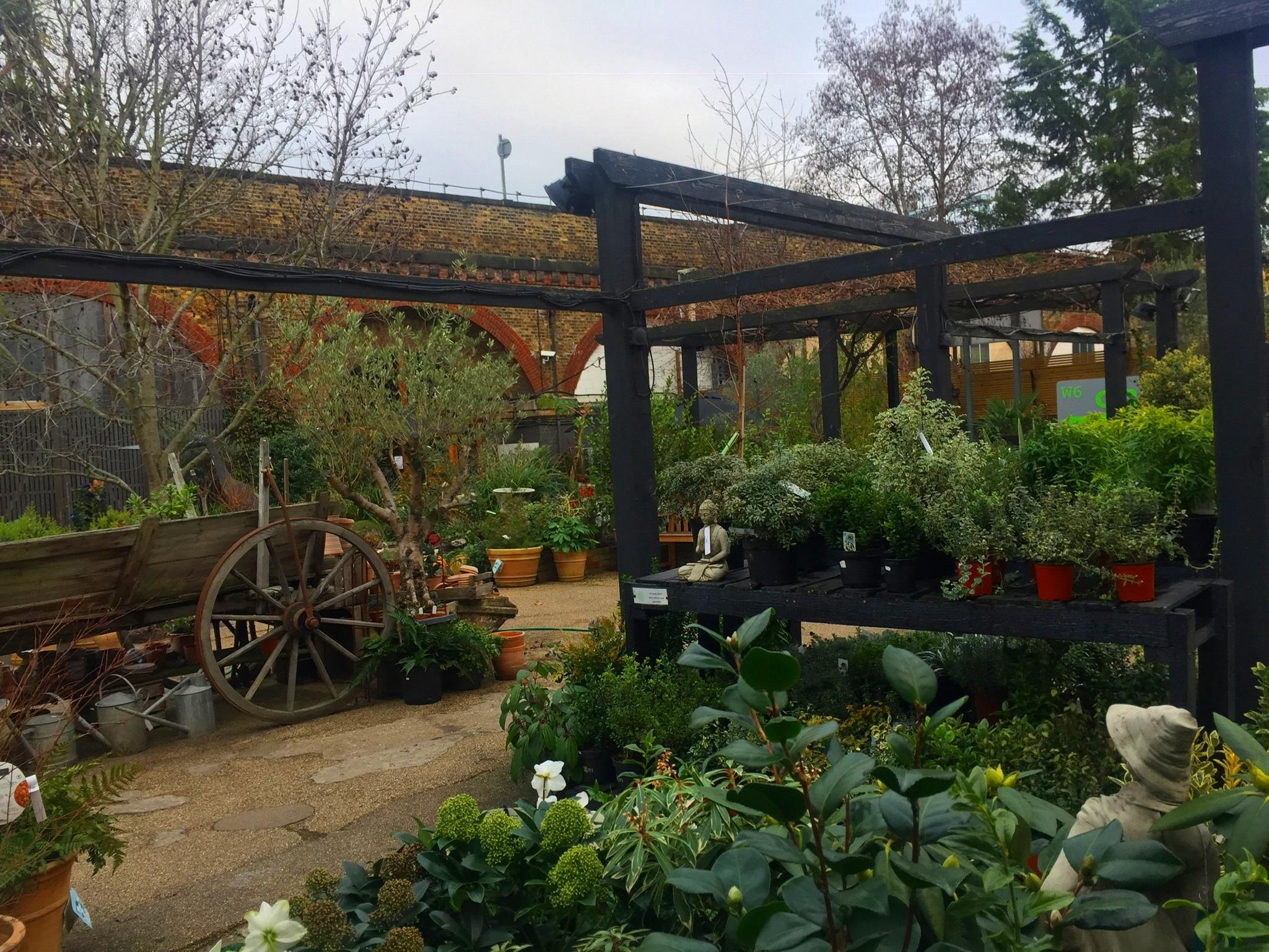 Garden Centre plants spring