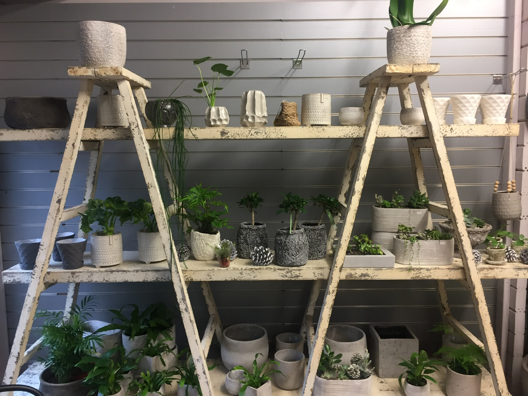 Plants garden centre