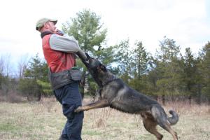 kyle_warren_dogs_daily_freeman_article_pic2.jpg