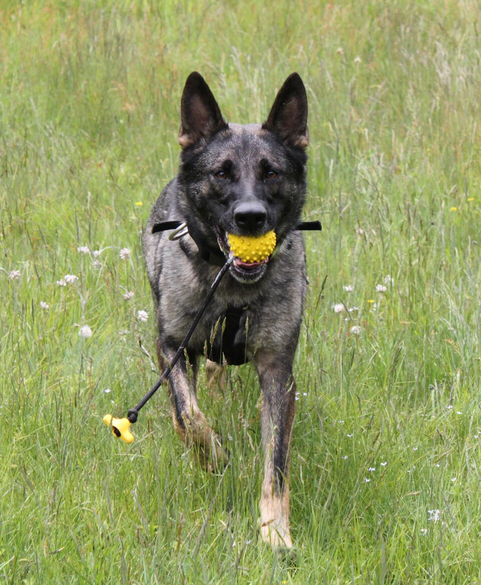 kyle_warren_dogs_search_and_rescue_K9_training1_preview.jpeg
