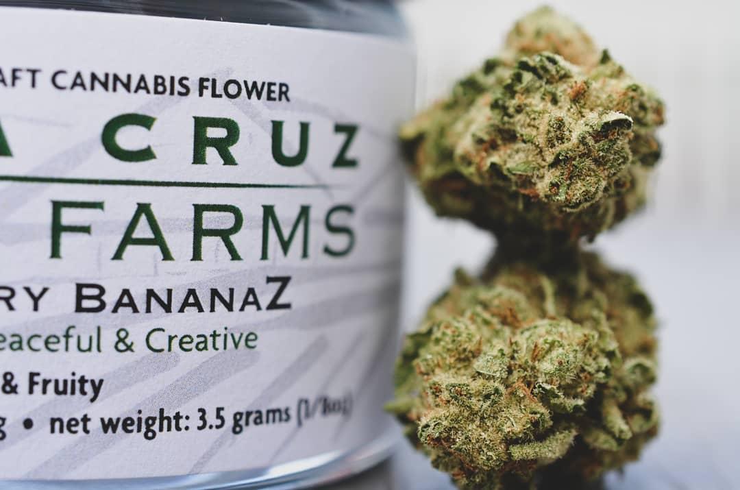 Strawberry BananaZ Jar.jpg
