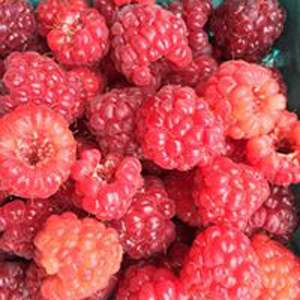 Red-Raspberries-pile-close.jpg