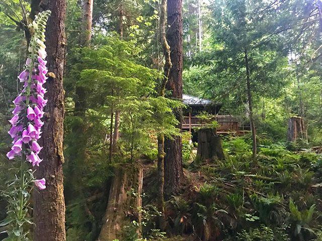 Just another beautiful ☀️ day in the forest.  #skookumuffin #skookumchucknarrows #getoutside #explorebc #sunshinecoastbc #madeirapark #egmont #skookumchuckbakery