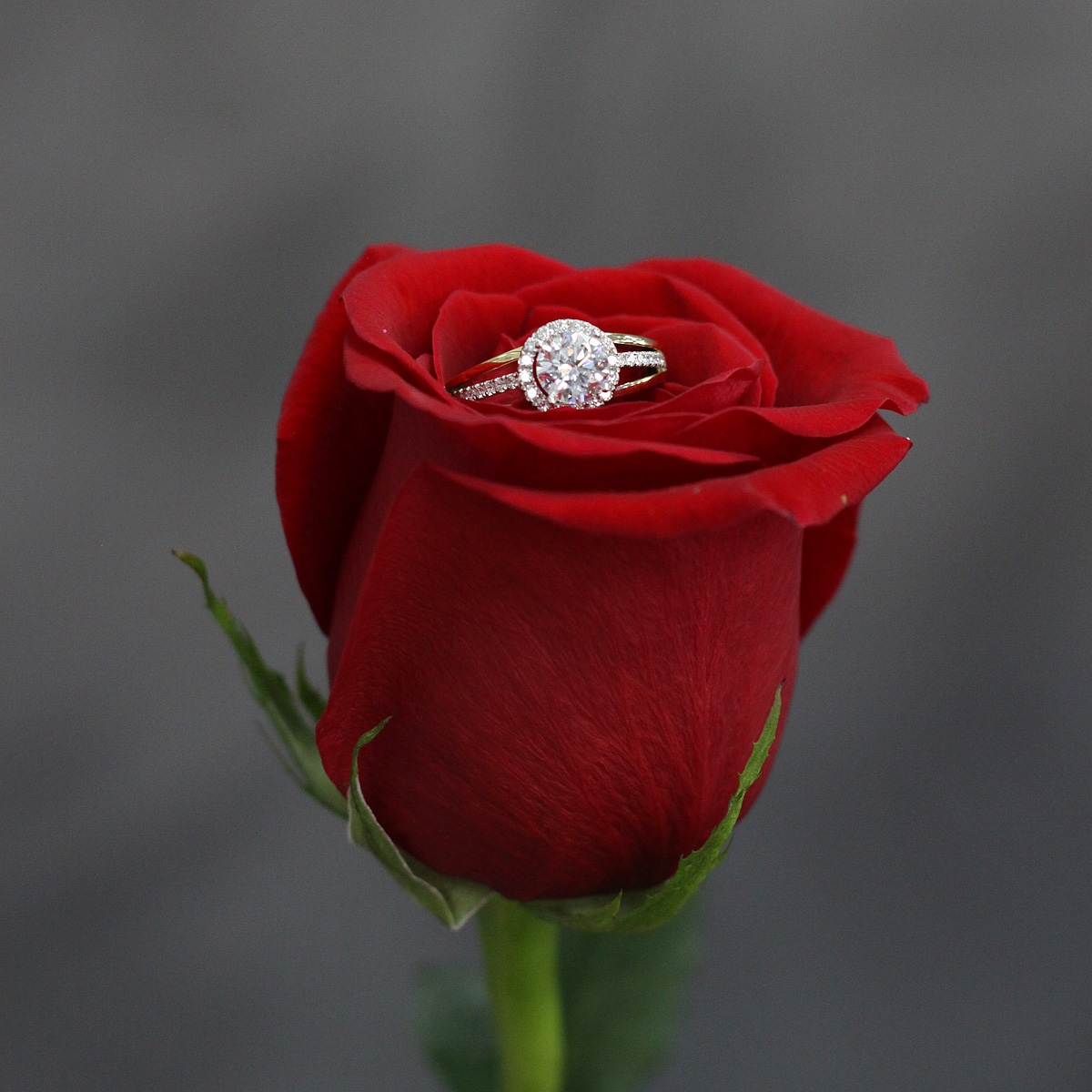 Bride & Groom - Shop engagement rings, semi mounts & wedding bands for bride and groom.