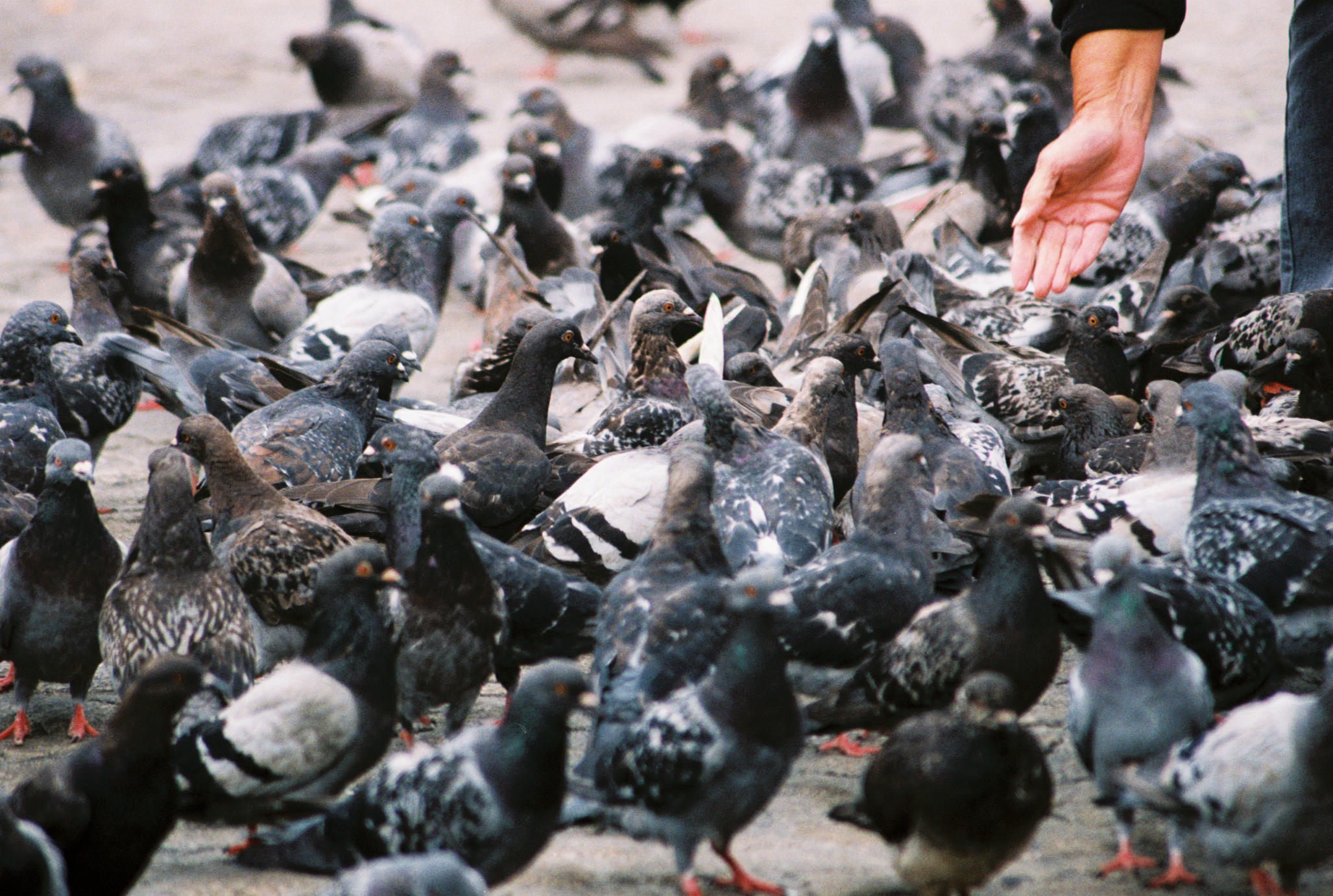New York birds and hand
