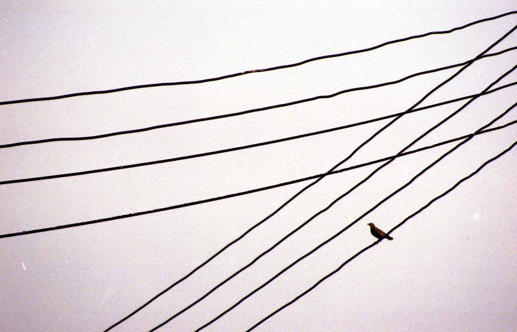 Bird on wires