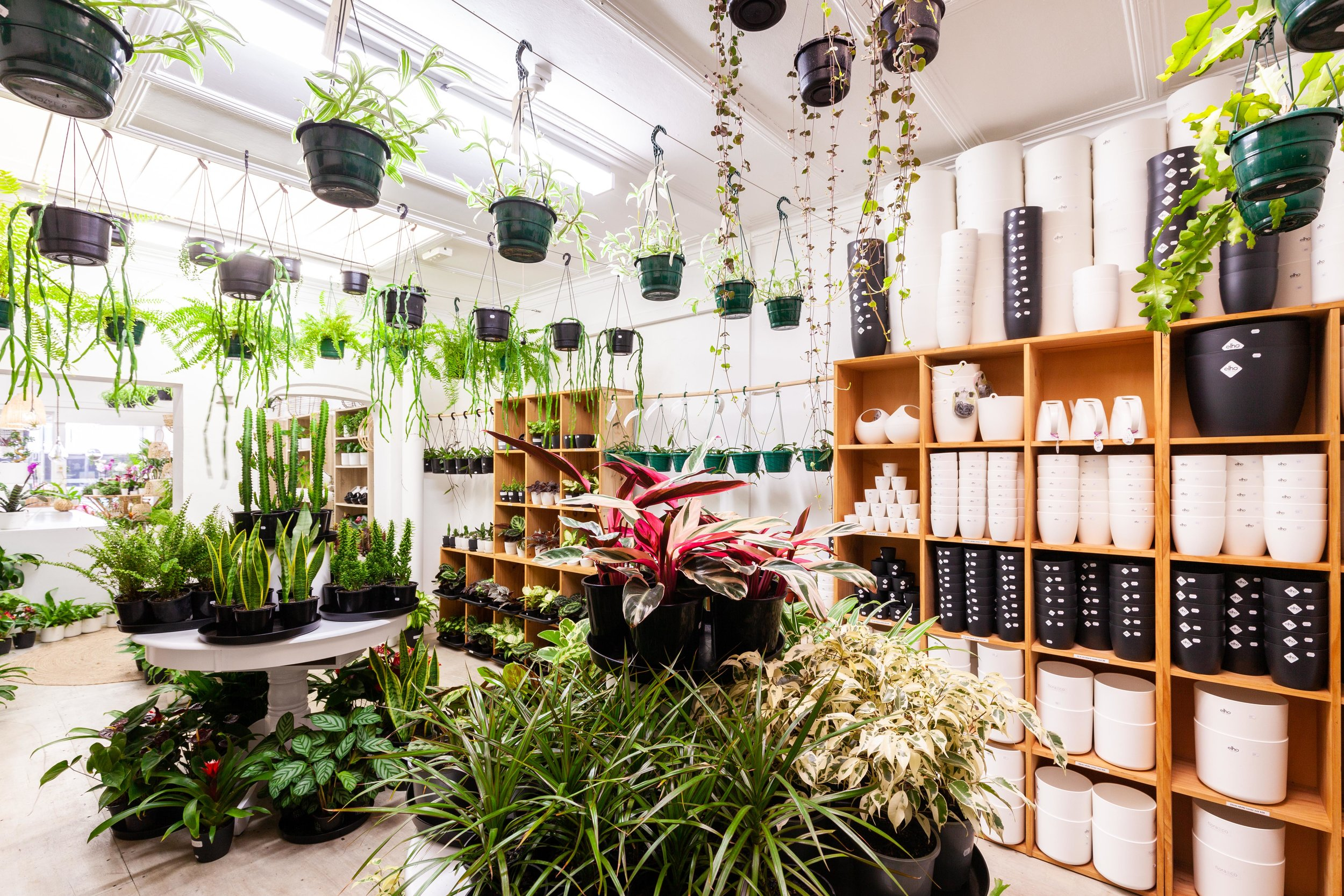 House Plants 101 with Maree from Flora and Co — MOOD Magazine