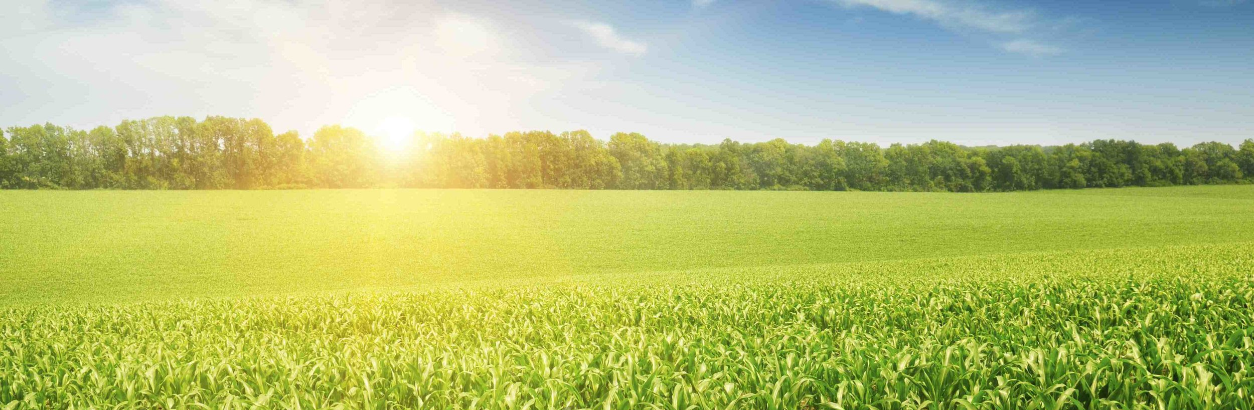 31721196-idyllic-hot-summer-morning-on-the-field.jpg